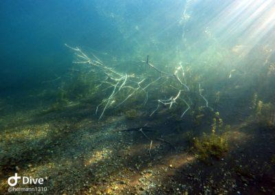 Zweige unter Wasser mit Sonnenstrahlen